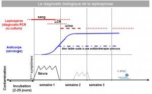 diagnostic biologique de la leptospirose