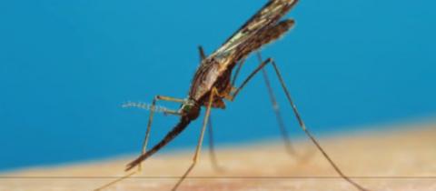 Création d'un MOOC en entomologie