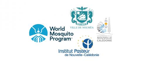 World Mosquito Program Nouméa recrute